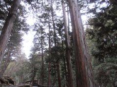 木曽ヒノキ林